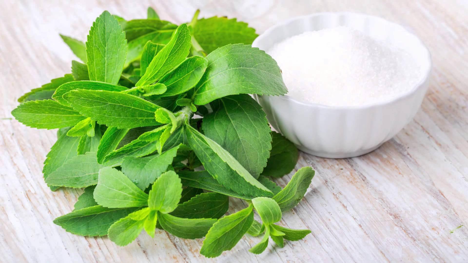Stevia é uma alternativa ao açúcar, descubra agora!